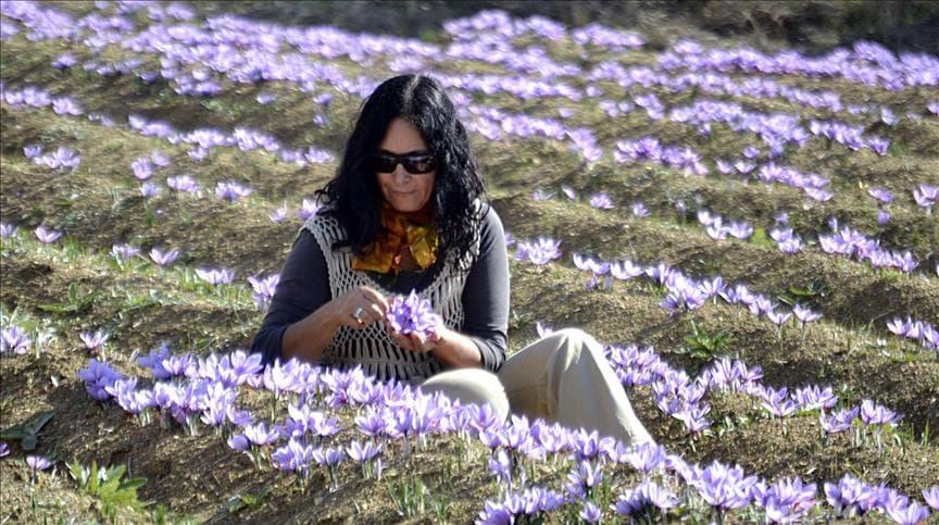 خرید زعفران قائنات در ترکیه