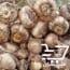 فروش پیاز زعفران در همدان