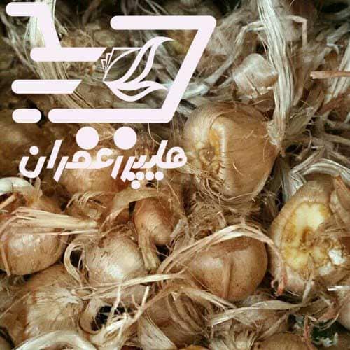 خرید اینترنتی پیاز زعفران